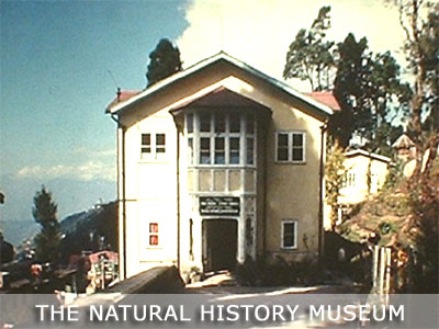 The Natural History Museum, Darjeeling
