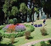 Lloyds botanical Garden at Darjeeling