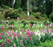 Botanical Garden at Darjeeling